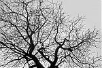 Tree, analog, s/w, schwarz-weiss, b/w, black and white, Contax T3