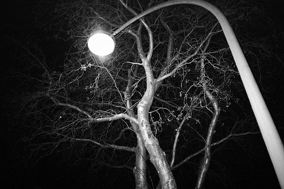Baum, Laterne, Nacht, analog, analogfotografie, analogphotography, Kodak Tmax400, sw, bw