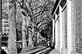 Bachstrasse, Bilk, covid 19, Düsseldorf, analog, analogfotografie, analogphotography, Kodak Tmax 400, Leica, Leica minilux, sw, bw